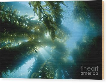 Giant Kelp Forest Wood Print by Dave Fleetham - Printscapes