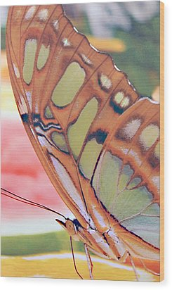 Golden Butterfly Wood Print by Don  Wright