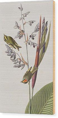 Golden-crested Wren Wood Print by John James Audubon