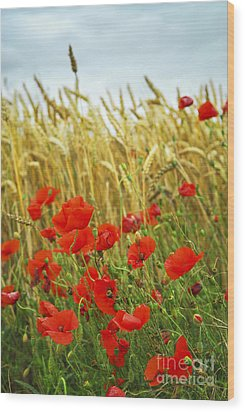 Grain And Poppy Field Wood Print by Elena Elisseeva