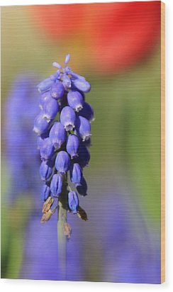 Wood Print featuring the photograph Grape Hyacinth by Chris Berry