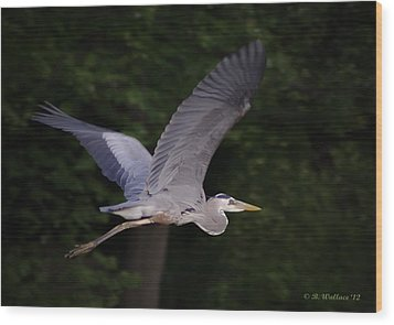 Great Blue Heron In Flight Wood Print by Brian Wallace