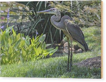 Great Blue Heron Wood Print by Linda Geiger