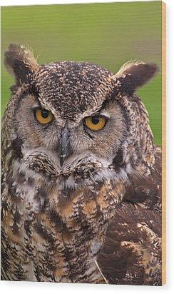 Great Horned Owl Wood Print by Alexander Rozinov
