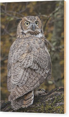 Great Horned Owl Wood Print by Tyson Smith