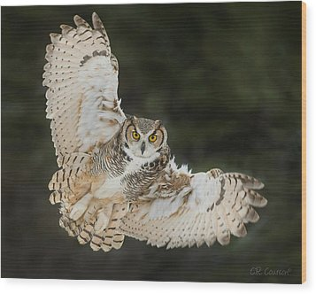 Great Horned Owl Wingspread Wood Print by CR Courson
