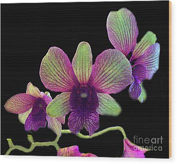Green And Maroon Orchids Wood Print by Merton Allen