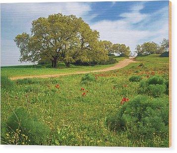 Green Fields Wood Print by Meir Ezrachi
