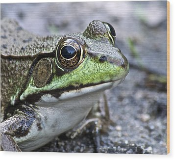 Wood Print featuring the photograph Green Frog by Michael Peychich