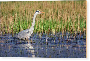 Grey Heron, Ardea Cinerea, In A Pond Wood Print