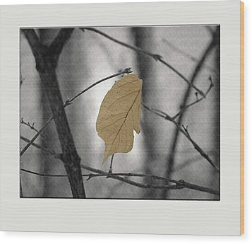Hanging In The Balance Wood Print by Sue Stefanowicz