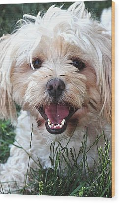Happy Dog Wood Print by Lisa  DiFruscio