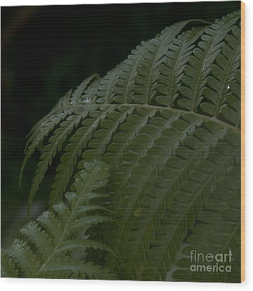Hapuu Pulu Hawaiian Tree Fern  Wood Print by Sharon Mau