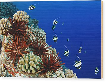 Hawaiian Reef Scene Wood Print by Dave Fleetham - Printscapes