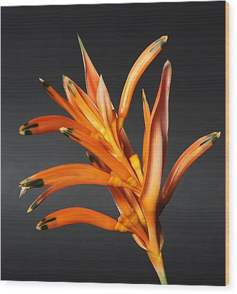 Heliconia Wood Print by Lynn Berreitter