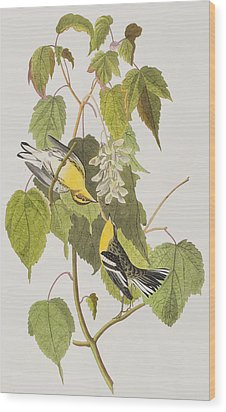 Hemlock Warbler Wood Print by John James Audubon