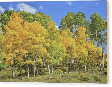 Wood Print featuring the photograph High Country Aspens by Ray Mathis