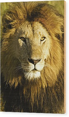 His Royal Highness Wood Print by Michele Burgess