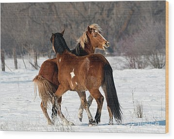 Wood Print featuring the photograph Horseplay by Mike Dawson
