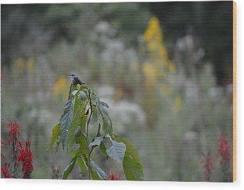 Humming Bird Wood Print by Linda Geiger