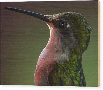 Hummingbird Wood Print by Brian Stevens