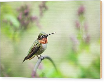 Wood Print featuring the photograph Hummingbird II by Christina Rollo
