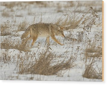 Hunting Wood Print