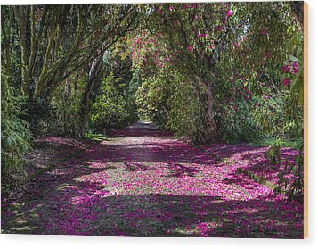 In The Pink  Wood Print by Martina Fagan
