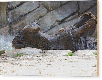 Indian Rhinoceros Wood Print by Thea Wolff