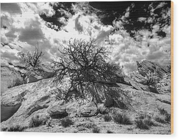 Ir Tree Escalante Wood Print