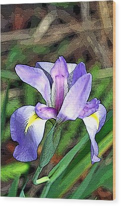 Iris Wood Print by Rosemary Aubut
