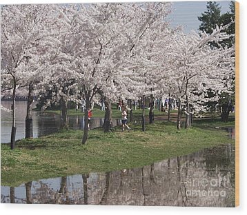 Japanese Cherry Blossom Trees Wood Print by April Sims