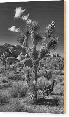 Joshua Tree And Cloud Wood Print by Peter Tellone