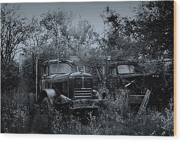 Junkyard Dogs II Wood Print by Off The Beaten Path Photography - Andrew Alexander