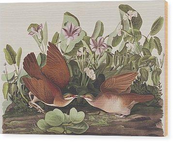 Key West Dove Wood Print by John James Audubon