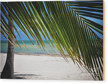 Wood Print featuring the photograph Key West Palm by Kelly Wade