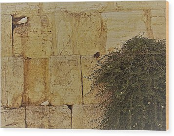 Kotel Sunshine Day Wood Print