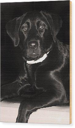 Labrador Retriever  Wood Print by Cathy  Beharriell