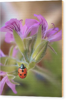 Ladybird Wood Print by Meir Ezrachi