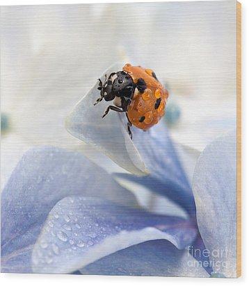 Ladybug Wood Print by Nailia Schwarz