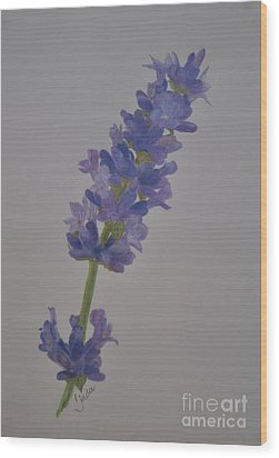 Wood Print featuring the drawing Lavender by Linda Ferreira