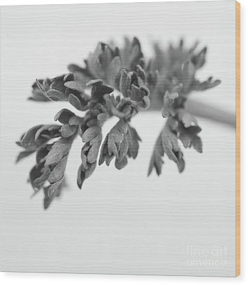Leaf Wood Print by Gabriela Insuratelu