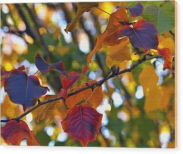 Leaves Of Autumn Wood Print by Stephen Anderson