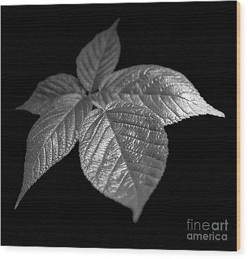 Leaves Wood Print by Tony Cordoza