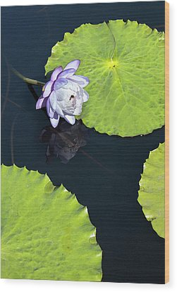 Wood Print featuring the photograph Lily Love by Suzanne Gaff