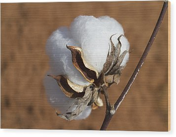 Limestone County Cotton Boll Wood Print