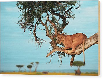Lioness In Africa Wood Print by Sebastian Musial