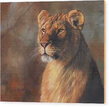 Lioness Portrait Wood Print by David Stribbling