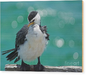 Little Pied Cormorant I Wood Print by Cassandra Buckley