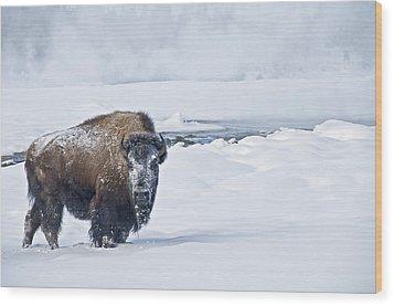Lone Bison Wood Print